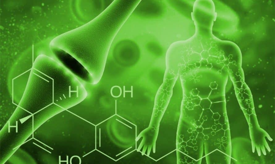 Sistema endocannabinoide del cuerpo humano