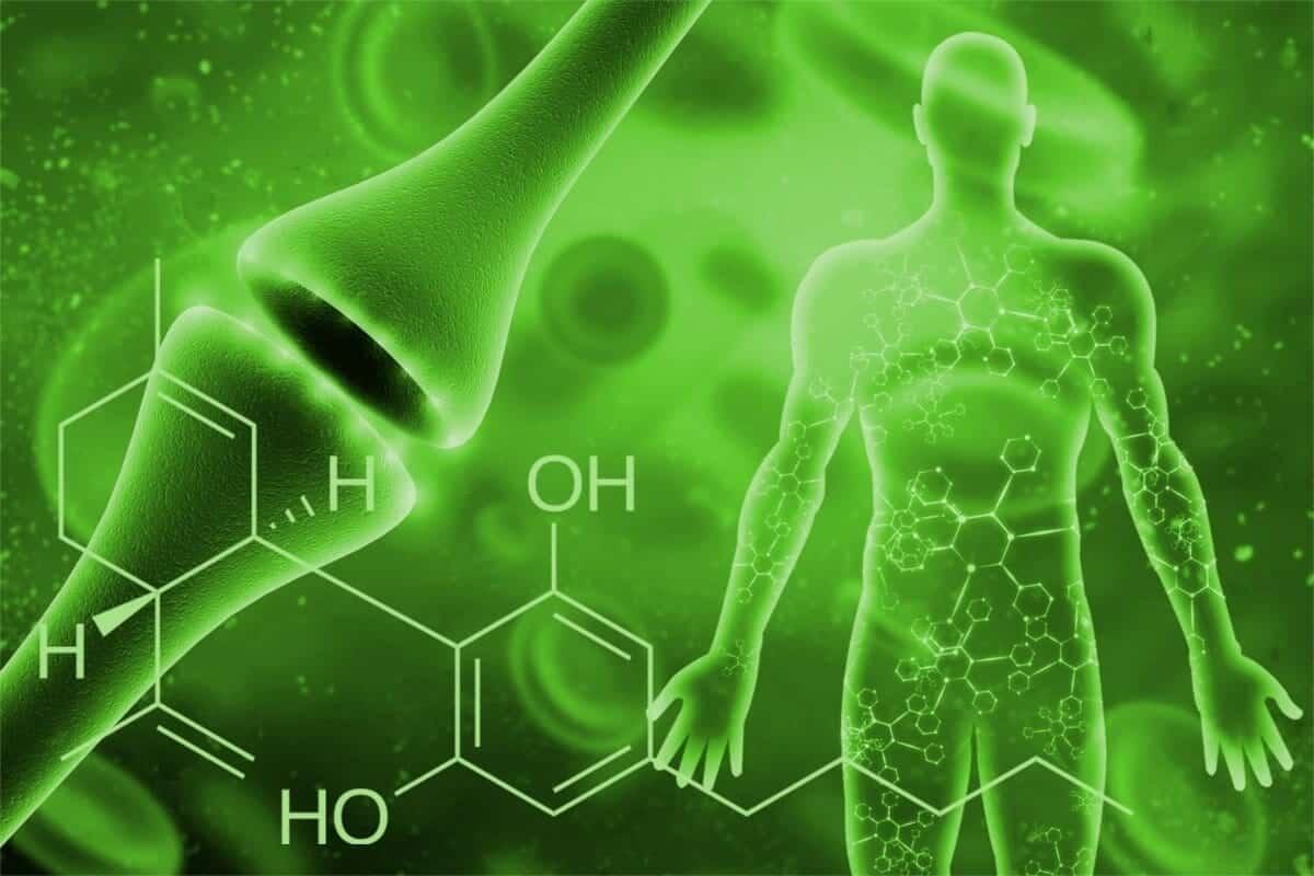 Sistema-endocannabinoide
