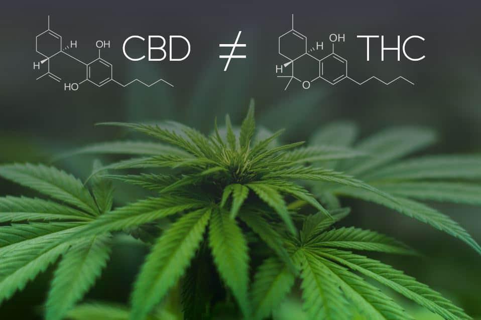 Diferencia entre THC y CBD