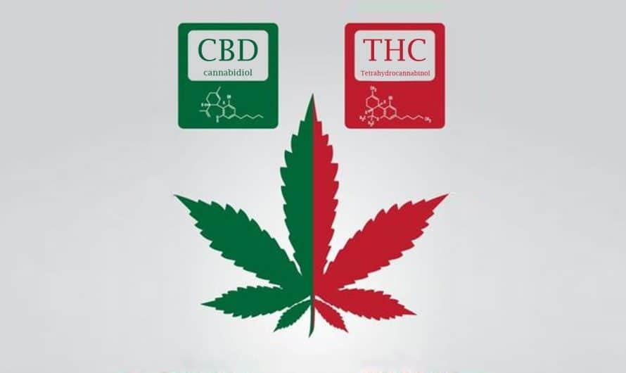THC y CBD ¿Cuál es la diferencia?