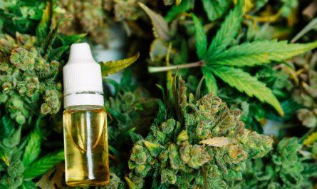 Aceite de cannabis y aceite de CBD - diferencias