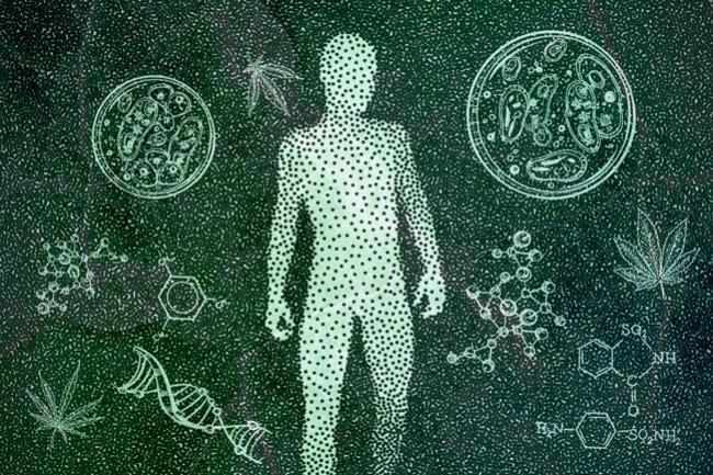 efectos del CBD en el cuerpo humano